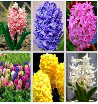 世界上最香的花