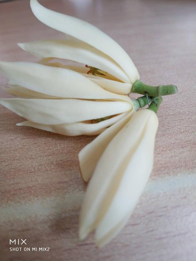 4种香香花,摘一朵带身上,清香扑鼻一整天