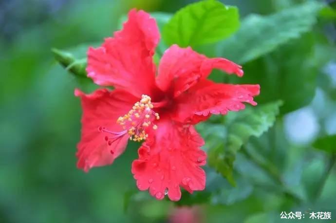 马来西亚的奇花异草