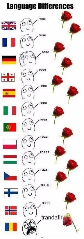 关于玫瑰的七个冷知识