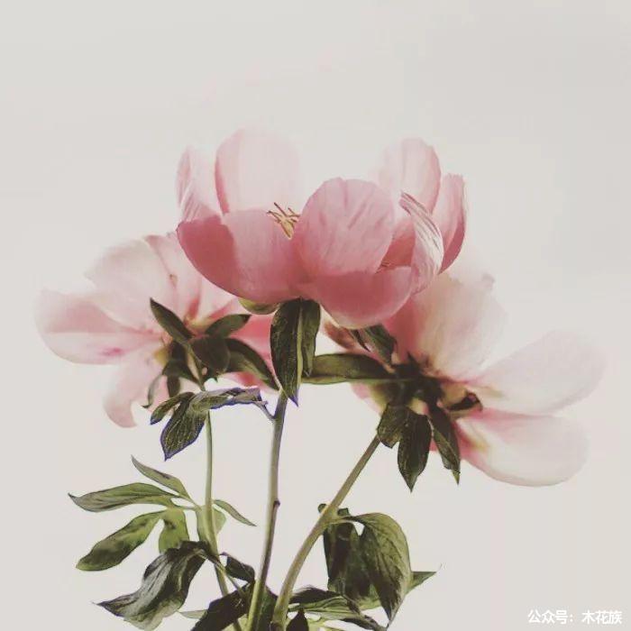 哪些花可以吃 ?这十五种鲜花有不可思议的功效