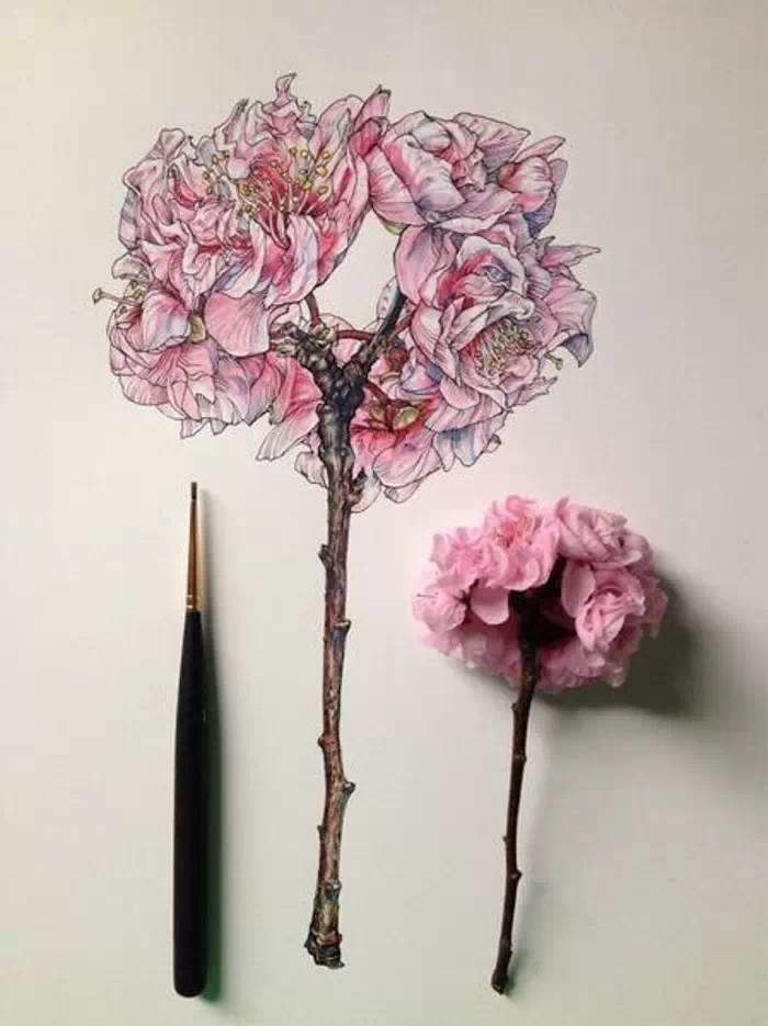 给我一支笔,还你一片春暖花开:关于花的手绘作品