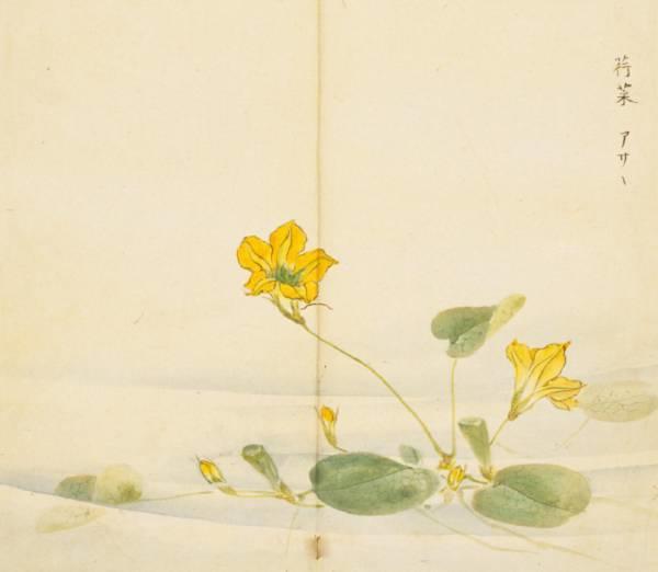 【视界】《诗经》里那些花花草草,手绘出来竟然美呆了!