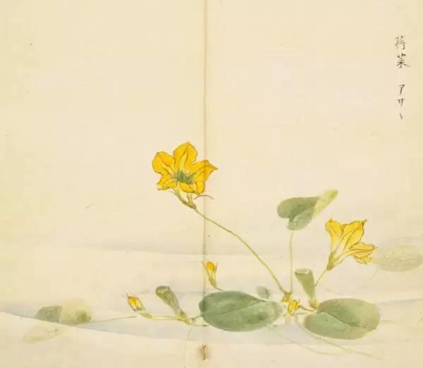 《诗经》里那些名字好听的花,手绘出来竟这么惊艳!