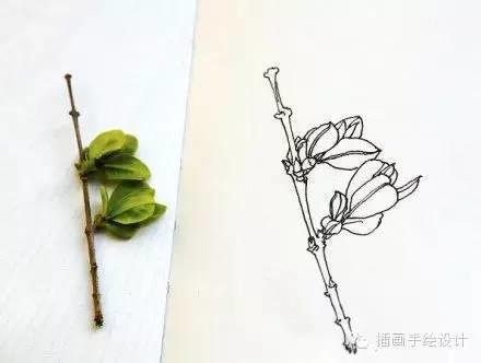 花朵手绘插图